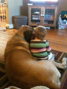 Mastiffs are the perfect size to cuddle with kids