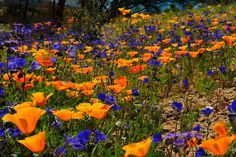 Valley of Flowers National Park, West Himalaya, Uttarakhand, India // It is renowned for its meadows of endemic alpine flowers and the variety of flora found there.