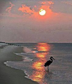 Happy evening dear friends — https://www.facebook.com/permalink.php?story_fbid=1600104453592132&id=100007777789106
