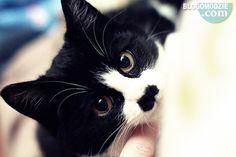 Kitler cat <3