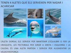 com són els dofins per fora