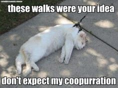 These walks were your idea, don't expect my co-opurration.