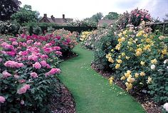 9 Best Gorgeous English Rose Gardens Images English Roses