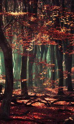˚Mystical Forest - Netherlands