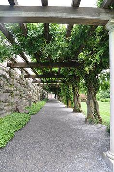 Wisteria Arbor, Biltmore Estate, Asheville, North Carolina