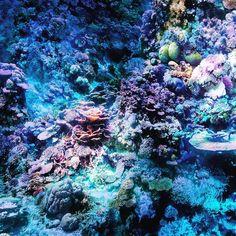 Kurztrip zum Great Barrier Reef #tagammeer #greatbarrierreef #panometer  #leipzig #traumhaftschön #jedencentwert #nurzuempfehlen by smnws http://ift.tt/1UokkV2