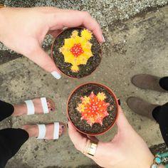 We Dress Alright//Succulent Farm Faves
