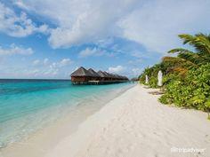 Mirihi Island Resort 10 Best Hotels in the World Island Resort, Beach Holiday, Beach Hotels, Island Life, Luxury Travel, Maldives, Vacation Spots, Trip Advisor, Travel Destinations