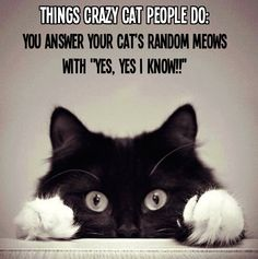 """It should be noted that attentive cat owners learn kitty language and answer their cats appropriately. Meows are not """"random."""" And yes, I'm a crazy cat lady. Funny Cats And Dogs, Cats And Kittens, Funny Animals, Cute Animals, Funniest Animals, Animal Funnies, Funny Kittens, Animals Dog, Animal Quotes"""