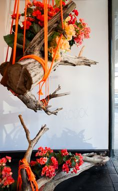 DIY hanging driftwood #MrCook// love the idea... Not sure about the way it's carried out for my style