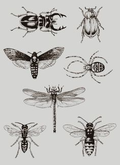 Tattoo ideas : bugs - beetles - spider - dragonfly - wasp