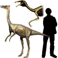 Pelecanimimus - Dinosaurios Jurassic World, Jurassic Park, Dinosaur Pictures, Dinosaur Fossils, Extinct Animals, Prehistoric Creatures, Cryptozoology, 3d Artist, Prehistory