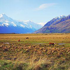 อกไมนานกใกลจะถงแลว . . . . . #newzealand #mtcook #aoraki