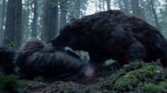 "The bear in The Revenant was played by an actor.  ""Thanks to movie magic a CGI bear maybe Leo's ticket to an Oscar."""