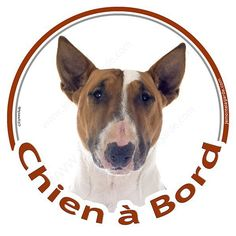 Bringé Chien Signe Voiture Fenêtre Autocollant V06 Bull Terrier sur Carte