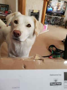 Helpful doggo brings the post. #dogs #cute #aww #puppies #doglovers #puppy #dog