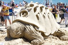 cool sand turtle--if only we could do this!
