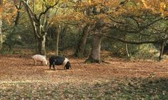 Early autumn is a great time to visit the New Forest, particularly if you like foraging for woodland treasures alongside some experts in their field