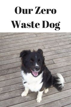 People often ask how a dog fits in with our zero waste goals, so this post outlines how zero waste is achieved with a delightful Border Collie called Maddie. You are in the right place about waste lif Waste Reduction, Eco Friendly House, Zero Waste, Dog Friends, Pet Care, Border Collie, Outlines, Pets, Goals