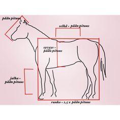 http://mwhevospalvelut.com/2016/01/13/hevosen-rakenne-1-ideaalin-hevosen-mittasuhteet/ #hevonen #suomenhevonen #rakenne #biomekaniikka #poni