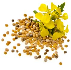 mustardseed flower - Google Search