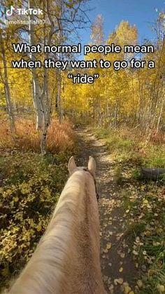 Funny Horse Videos, Funny Horse Memes, Funny Horse Pictures, Funny Vidos, Funny Animal Jokes, Funny Horses, Cute Horses, Horse Love, Funny Animal Videos