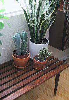 So in love with with the idea of putting plants on wooden benches indoor.