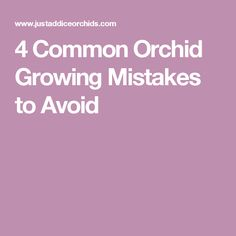 4 Common Orchid Growing Mistakes to Avoid