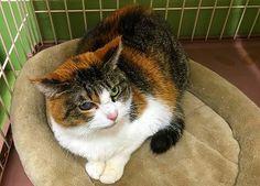 里親さんブログセンターの猫たち - http://iyaiya.jp/cat/archives/74876