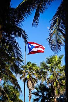 Flag among palms..