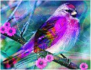 Dreamy-Robin Mead