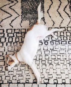 42 Cute Pets for 2016: #DSPetStyle | Design*Sponge