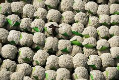 Cotton!  The Earth from Above by Yann Arthus-Bertrand.