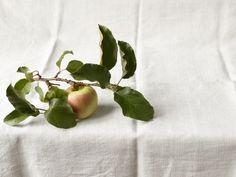 Apple, Apple Branch,