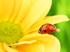 lady bug and daisys make me smile :)