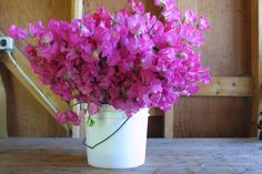 Blog - Page 95 of 112 - Floret Flowers