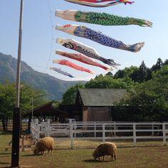鯉のぼりと羊@秩父羊山公園