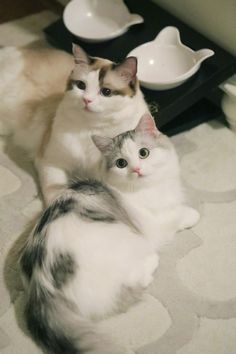 ✧ Cats Wallpapers ✧ Cute Baby Cats, Cute Baby Animals, Animals And Pets, Pretty Cats, Beautiful Cats, Animals Beautiful, Little Kittens, Kittens Cutest, Cats And Kittens
