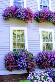"""Awesome window boxes too! Planting the right plants is imperative to get this effect. Looks like """"wave petunias"""" which grown like mad in summer heat. Container Flowers, Container Plants, Container Gardening, Succulent Containers, Plantas Indoor, Small Front Yard Landscaping, Landscaping Ideas, Window Box Flowers, Window Planter Boxes"""