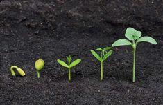 Plants Activities, Science AND Literacy Centers and Crafts - Kindergarten Plant Activities, Herbs