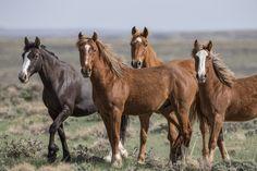 Big Horses, Animal Antics, All The Pretty Horses, Draft Horses, Horse Pictures, Wild Hearts, Beautiful Creatures, Fine Art Prints, Cute Animals