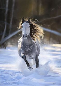 The most beautiful thing I've experienced is galloping in the snow...horses breathing and the sound of them stampeding on fresh powder. Awesome!
