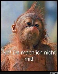 Lustige Bilder und Sprüche, tolle Witze und alles was Spaß macht. Täglich neu Funny pictures and sayings, great jokes and everything that is fun. Animals And Pets, Funny Animals, Cute Animals, Unicornios Wallpaper, Great Jokes, Silly Faces, Satire, Really Funny, Funny Quotes