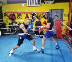 Boxer Training, Celtic Warriors, Shit Happens