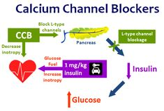 Calcium channel blockers (CCBs) decrease cardiac inotropy, may increase vasodilation, and in overdose can block insulin secretion. Cardiogenic shock is worsened by the switch from free-fatty acid metabolism to glucose because the heart is unable to transport glucose into cardiac cells due to the lack of insulin.