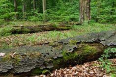 43 Firewood, Plants, Woodburning, Plant, Planets