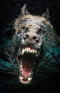 Scarey.... mine does this all the time just never seen the upward view!                   GSD with face in water ... Awesome