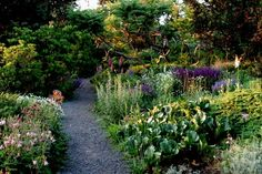 Wild Garden - The Gardens at Wave Hill || Wave Hill - New York Public Garden and Cultural Center