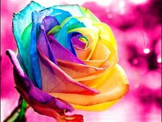 A rainbow rose Rainbow Flowers, Rainbow Colors, Rainbow Stuff, Neon Colors, Vivid Colors, Beautiful Roses, Beautiful Flowers, Beautiful Bouquets, Colorful Roses