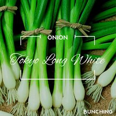 Tokyo Long White (Bunching) - Onion heirloom seed for just .99 each packet. We want to bring the finest quality seed for the lowest possible price. #organic #garden #gardening #seed #inspiration #vegan #cleaneating #vegetarian #vegetable